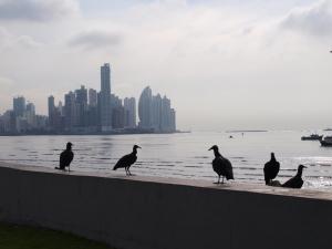 Panama 市街