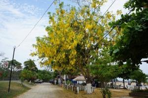Guayacan Yellow
